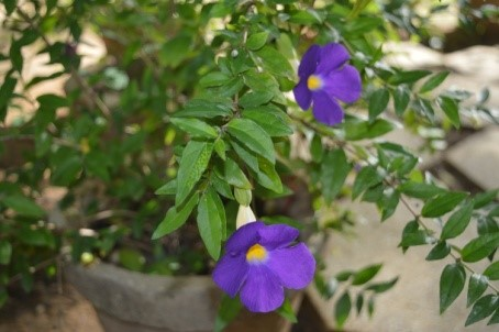 gite-senegal-fleurs-05