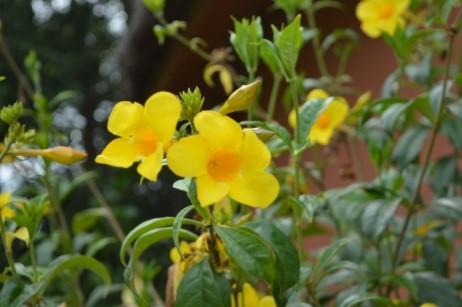 gite-senegal-fleurs-06