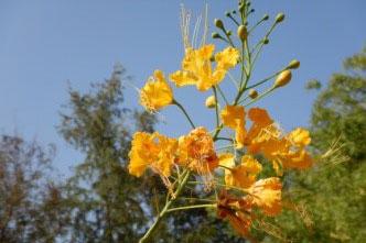 gite-senegal-fleurs-08c