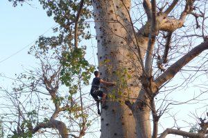 accrobranche-baobabs-senegal-02