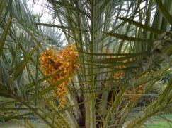 hotel-senegal-palmiers