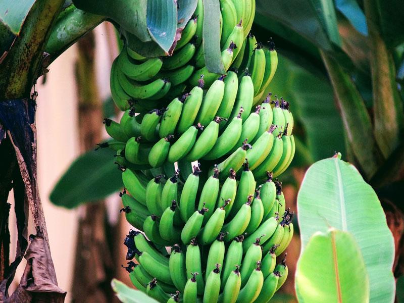 senegal-hotel-bananiers